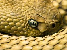 snake | Snake Eye 1200 x 899