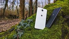 """""""650 ^TM regram @detkodave Beauties in the woods   #lumia #lumia950 #lumia650 #beauty #devices #nature #woods #afterlight #shotonmylumia #nban #pickit…"""""""