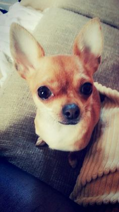 Chica ♥  Cuteness! So much cuteness!!!
