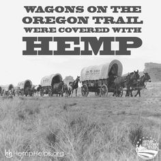 Wagons on the Oregon Trail were covered with hemp! #hemp