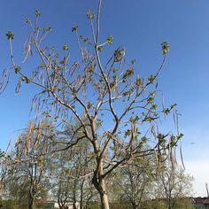 #followerpower Was für ein Baum ist das?
