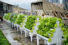 HydroPro Systems installed at a Rooftop Garden in Hong Kong - May 2014