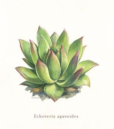 Pin By Widya On Reception Plant Drawing Succulents Illustration Botanical Drawings