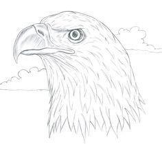 How To Draw A Realistic Bald Eagle Head - Art For Kids Hub ...