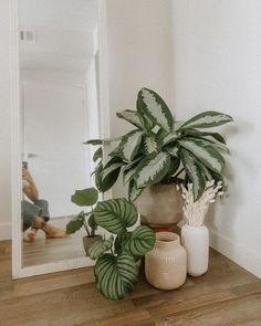 Euny and Burke, Plants, Indoor Plants, Indoor Plants Decor, Indoor Plants Styling, Plants in Bedroom, Plants Aesthetic, Plants That Don't Need Sunlight, Bedroom Ideas, Bedroom Decor, Bedroom Inspiration, Houseplants, Houseplant Display, Indoor Houseplants, Houseplant Jungle, Home Decor, Home Decor Ideas, Lifestyle Blog, Plant Blog, Plant Blogger, Calathea Plant, Calathea Orbifolia, Chinese Evergreen, Chinese Evergreen Plant