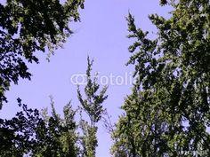 """Laden Sie den lizenzfreien Clip """"Himmel und Laubbäume im Wind"""" zum günstigen Preis herunter. Stöbern Sie in unserer Bilddatenbank https://de.fotolia.com/partner/200576682 und finden Sie schnell das perfekte Stockbild/-video."""