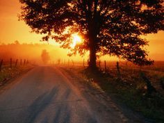 Google Image Result for http://cache2.allpostersimages.com/p/LRG/21/2189/C1FAD00Z/posters/john-elk-iii-tree-and-road-at-sunrise-cades-cove-great-smoky-mountains-national-park-tennessee.jpg