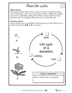 plants in action primary connection pdf