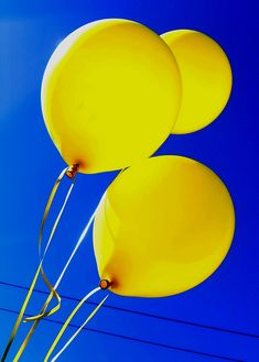 Blue sky,Yellow balloons by Darwin Bell Mellow Yellow, Blue Yellow, Colour Yellow, Bright Yellow, Blue Gold, Yellow Balloons, Yellow Fever, Yellow Submarine, Shades Of Yellow