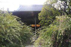 宝戒寺 鎌倉七福神 毘沙門天を祀るお寺。夏に咲く萩が見事。また彼岸花も見どころです。鶴岡八幡宮から徒歩3分。