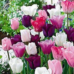 Monet's Garden Tulip Mix