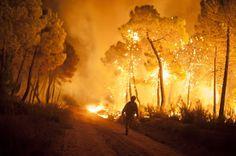 Desordenaré las lluvias.: Arde el monte