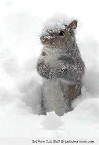 baby animals playing in snow - Bing images