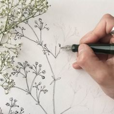 A little process video at speed of the Bernie's breath drawing I posted yesterday. drawn with much love 😘 . Ink Illustrations, Botanical Illustration, Breathe, Paintings, Invitations, Logos, Drawings, Videos, Nature