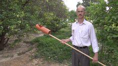 Fruits picker أداة لقطف الثمار