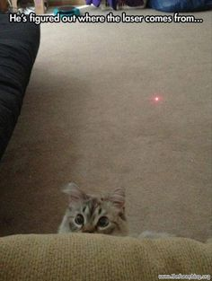 funny cat picture-where the laser comes from