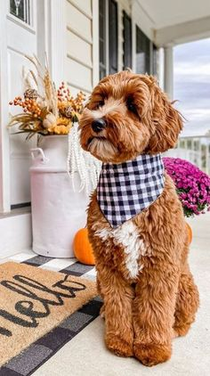 Australian Labradoodles vs Labradoodles - What is The Difference? Super Cute Puppies, Cute Baby Dogs, Cute Dogs And Puppies, Cute Baby Animals, Pet Dogs, Pets, Doggies, Animals Dog, Beauceron Dog