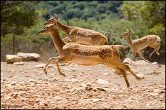 שמורת טבע חי-בר כרמל