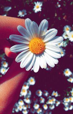 Qhd Wallpaper, Smile Wallpaper, Tumblr Wallpaper, Aesthetic Iphone Wallpaper, Aesthetic Wallpapers, Flower Jeans, Bloom Where Youre Planted, Flowers Instagram, Hand Flowers