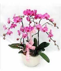 Online Flower Ordering,  http://armorgames.com/user/sreyasmith  Where To Buy Cheap Flowers,Order Flowers Online For Delivery,Buying Flowers Online