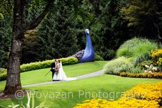 Vancouver wedding photographer - Povazan Photography - minter garden bride - cool, romantic and amazing wedding  pictures