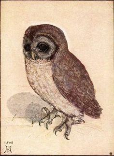 An owl done by Albrecht Durer.