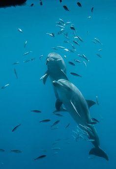 Tom aMisha plavou vesvé ponorné kleci nedaleko pobřeží Egejského moře. Delfíni žijící vzajetí si tak zvykli žrát zrukou cvičitelů mrtvé ryby, že živou kořist nepovažují zapotravu. Dříve než budou vypuštěni nasvobodu, musí se znovu naučit lovit.