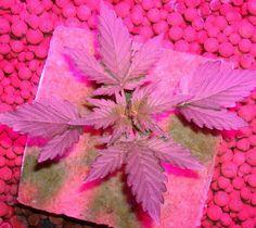 plant grow lights lowes 600w cob led full spectrum grow lights   Grow Lights   Pinterest   Grow lights Led grow lights and Led grow & plant grow lights lowes 600w cob led full spectrum grow lights ...