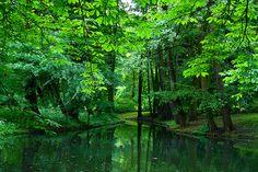 Łazienki Park, Warsaw  green