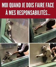 funny pictures to take with friends * funny pictures funny pictures lol funny pictures to take with friends funny pictures of animals videos funny pictures of chickens Amor Humor, Frases Humor, Memes Humor, Funny Texts, Funny Jokes, Hilarious, Funny Sarcasm, Funny Sign Fails, Funny Signs