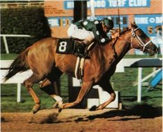 Terlingua(1976)Secretariat- Crimson Saint By Crimson Satan. 17 Starts 7 Wins 4 Seconds 1 Third. $423,896.  Won Hollywood Juvenile Championship(G2) Against Colts, Hollywood Lassie(G2). Dam Of Storm Cat.