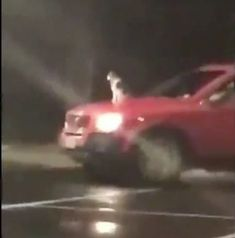 #Car-surfing #cat sparks #cop call -- but pet loves it...