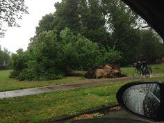 Florapark #storm