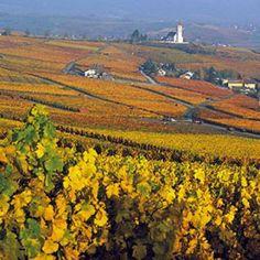 Vineyard, Outdoor, Philosophy, Crying, Red Wine, Switzerland, History, Outdoors, Vine Yard