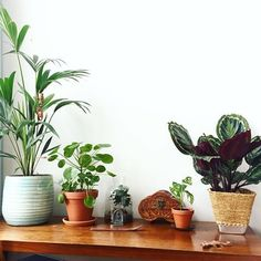 Cleaning the house and rearranging my plants while listening to some good old music Have good one plant friends! Diy Planters, Planter Pots, Interior Styling, Interior Design, Flower Gardening, Indoor Gardening, Tgif, Good Old, Indoor Plants