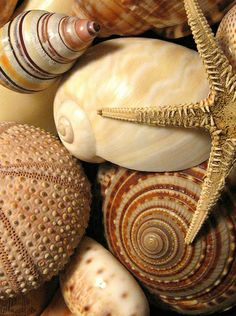beach - seaside - costal living - sea shells