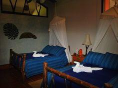 Loros room Guacamayas Biological Station