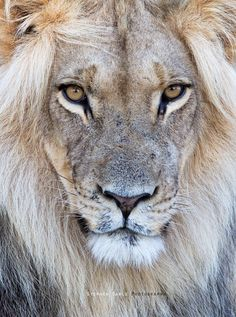 God is powerfull as a lion and at the same time as soft as a lamb.... Beautiful!
