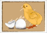 FREE---Life Cycle of a Chick---A beautifully illustrated series of flash cards showcasing the life cycle of a chick. It consist of 5 cards with editable text which together illustrate how an egg develops in to a fully grown chicken.