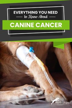 In this podcast episode Dr. Lori Cesario discusses some of the common signs of canine cancer and the treatment options available. Dog Health Tips, Michigan State University, Types Of Cancers, Good Advice, Need To Know, Clinic, Everything, Signs, Shop Signs