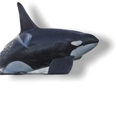 Orcas, Objects, Killer Whales