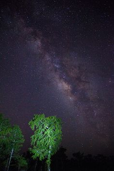 Florida Everglades Milky way   by Vision Images