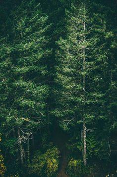 Лес красивый же