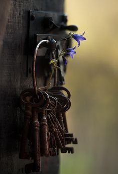 Not my circus . not my monkeys Photography Backdrops, Nature Photography, Cles Antiques, Not My Circus, Old Keys, Affinity Photo, Keys Art, Flower Aesthetic, Old Doors