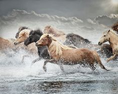 Iceland Photograph - The Crossing by Phyllis Burchett Please vote for my image in the FAA Billboard Contest! Horse Photography, Fine Art Photography, Beautiful Horses, Pretty Horses, Icelandic Horse, Wild Spirit, Wild Mustangs, Equine Art, Horse Pictures