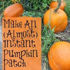 http://misskopykat.blogspot.com/2013/10/almost-instant-pumpkin-patch.html