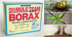 15 Uses for Borax In The Home & Garden Deserving of the accolades normally reserved for white vinegar and baking soda, borax is so much more than simply a laundry detergent booster. Used in many-a household for more than 100 years, borax is a.
