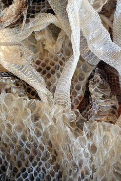 shed snake skin