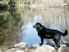 "Black retriever ""Swansea Jack"" saved at least 27 people from drowning over a decade."