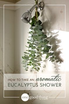 Transform your daily shower into a eucalyptus spa experience! An invigorating indulgence that's totally affordable! Eucalyptus Shower, Dried Eucalyptus, Eucalyptus Branches, Bathroom Spa, Bathroom Interior, Bathroom Ideas, Master Bathroom, Design Bathroom, Herbs